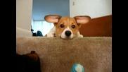 Ох, какви уши :))