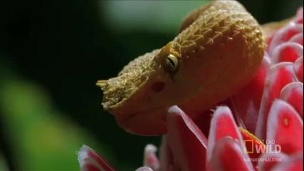 Тайното оръжие на змията