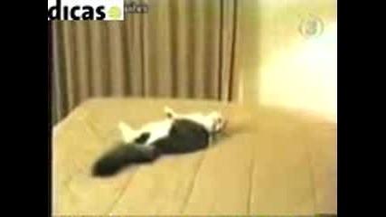 дива котка се мисли за шумахер