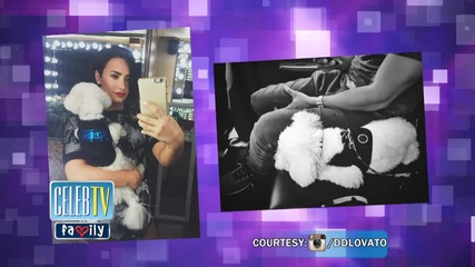 Demi Lovato's Dog Dies In Tragic Accident