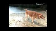 Куче Се Отърсва От Вода На Забавен Кадър