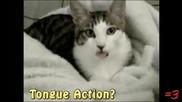 Смешна котка