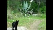Бухал и котка играят заедно