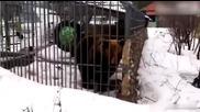 Глупак бръкна в клетката на мечка и тя му откъсна ръката