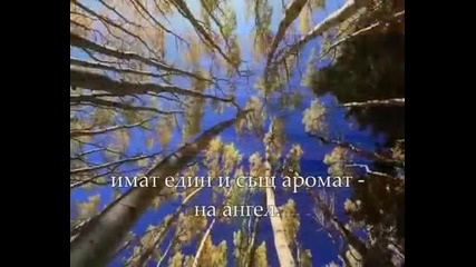Prekrasna Frenska pesen ( Prevod )