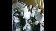 Много Смешни И Сладки Котенца!!!!!
