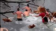 = Йордановден - хващането на кръста в Монтана 2013г. =