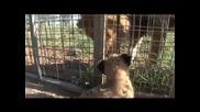 Kevin Richardson - Приятел С Лъвица