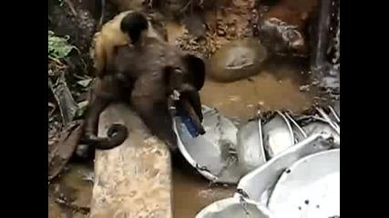 Маймунка мие съдове
