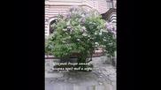 Писмо - Георги Константинов - Secret garden