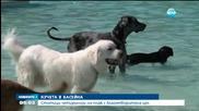 Внимание - кучета в басейна - Новините на Нова