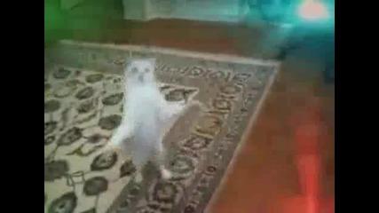 Котка денси много лудо
