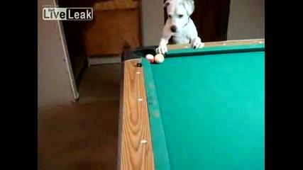 Куче разбива на билярд