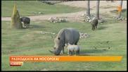 Носорогче дебютира в Сан Диего