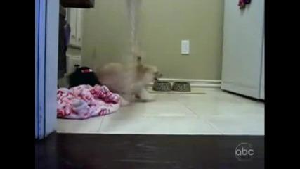 Голямото кучешко бягство!