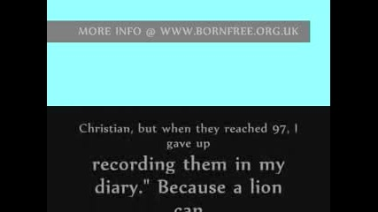 Лъвът Кристиян - просто няма такава Любов