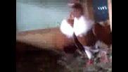 чирпански гълъби от любимец