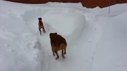 Хитро куче се бъзика с другаря си