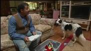 Куче - феномен, което знае над 1000 думи