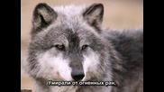 Волчонок А.маршал