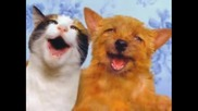 Keep Smiling Funny Cats