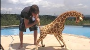 Magical Giraffe Gets Frisky!