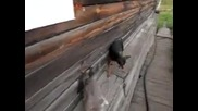 В Русия дори и животните са полудели