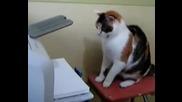 Котка Vs Принтер
