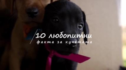 10 любопитни факта за кучетата