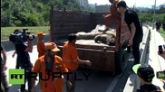 Georgia: Dead tigers, lions hauled off the streets of Tbilisi