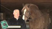 Най-високият кон в света - световен рекорд на Гинес