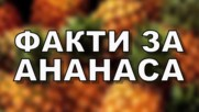 Факти за ананаса