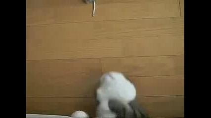 Много смешна котка