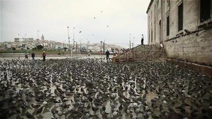 Хиляди птици