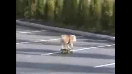 Куче скейтър SK8