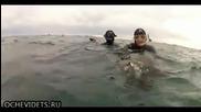 Любопитно морско лъвче целува водолази !