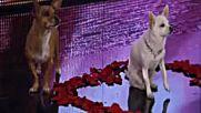 Бевърли Хилс Чихуахуа 2 Бг Суб. ( Beverly Hills Chihuahua 2 - 2011) Част 3/3