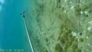 За октопод на Бяло море