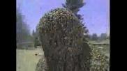 Човек Накацан От 350 000 Пчели - Рекорд на Гинес