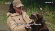 Росомаха | Юконски ветеринар | National Geographic Bulgaria