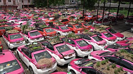 Thailand: Abandoned taxis in Bangkok used to grow food for jobless drivers
