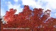 Златна есен в Минесота 10.10.2014
