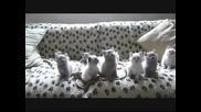 Малки Котенца Играят