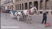 Най - добрите скрити камери с коне