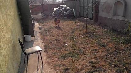 това куче си има камуфлаже бункер