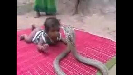 Дете си играе с кобра