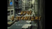 Куче В Чекмедже С Веселин Прахов (1982) Бг Аудио Част 1 Tv Rip Бнт Свят
