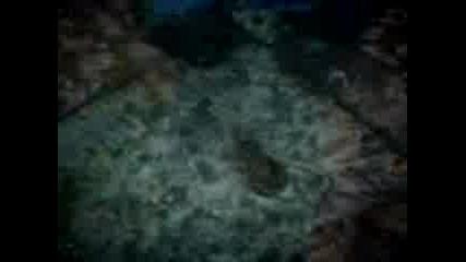жаба в морската