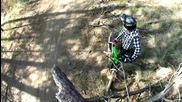 един ден из гората с kona :d