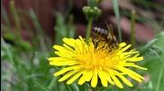Пчеличка 2